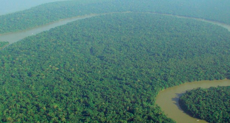 'Saving the rainforest 2.0:' New report makes recommendations for improving forest protection