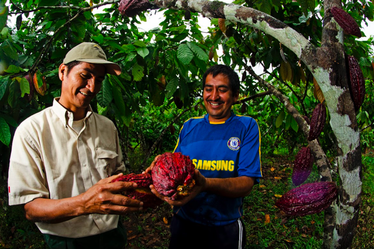 photo image Peru: How chocolate saved a community and a protected area from the drug trade