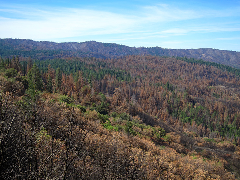 The Rim Fire near Yosemite National Park, like most fires in western forests, burned mainly with a mixture of low- and moderate-severity effects, as well as some high-severity patches. Photo by Doug Bevington.