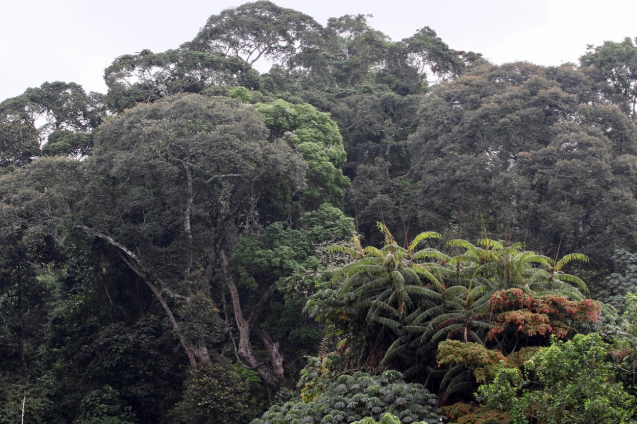 West African forest in Ghana's Kakum National Park.