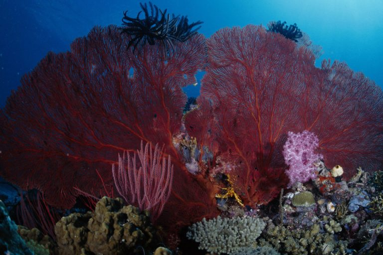 Marine life in Papua New Guinea. Image by martinnemo via Flickr (CC BY 2.0).