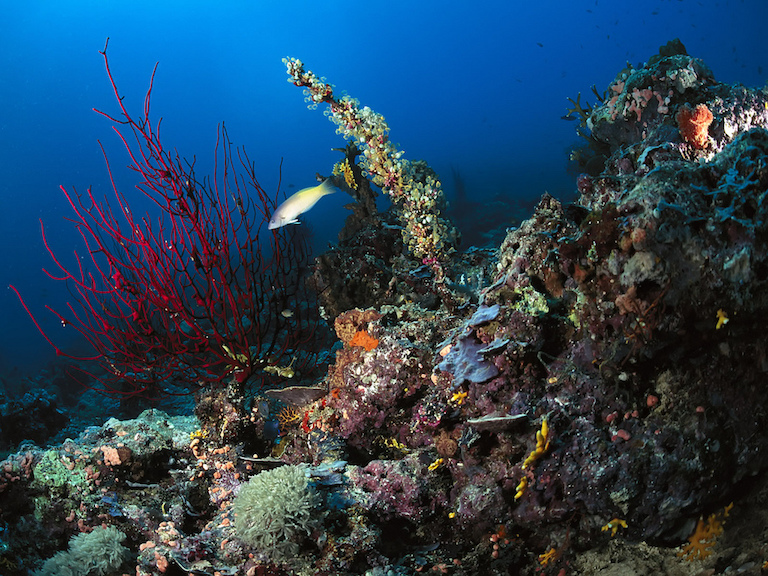 Marine life in Papua New Guinea. Image by Anderson Smith2010 via Flickr (CC BY 2.0).