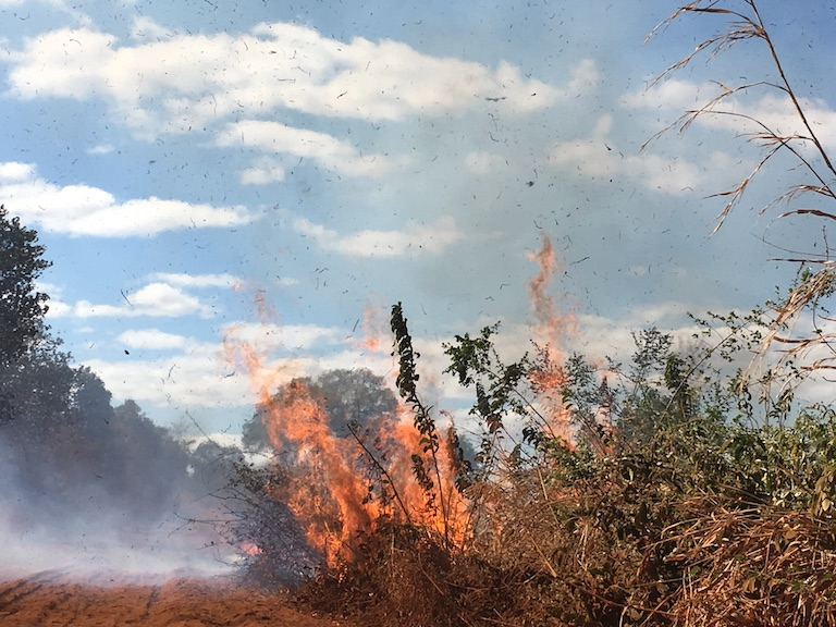 A 2017 fire in the Bongolava Forest Corridor, likely set by someone clearing their field after a corn harvest. The fire spread on open farmland in the protected area, threatening the forest on the other side of the ridge. Image by Rowan Moore Gerety for Mongabay.