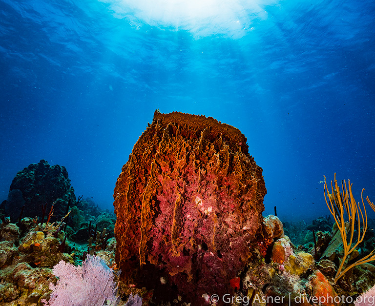 Photo by Greg Asner / DivePhoto.org.