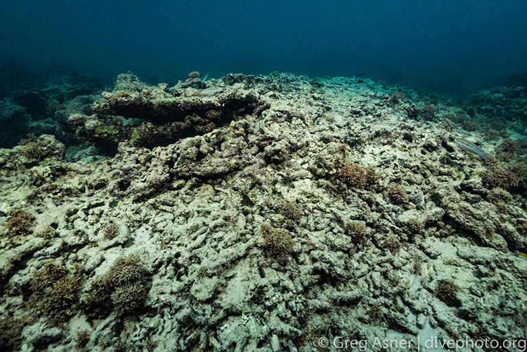 Damaged reef. Photo by Greg Asner / DivePhoto.org.