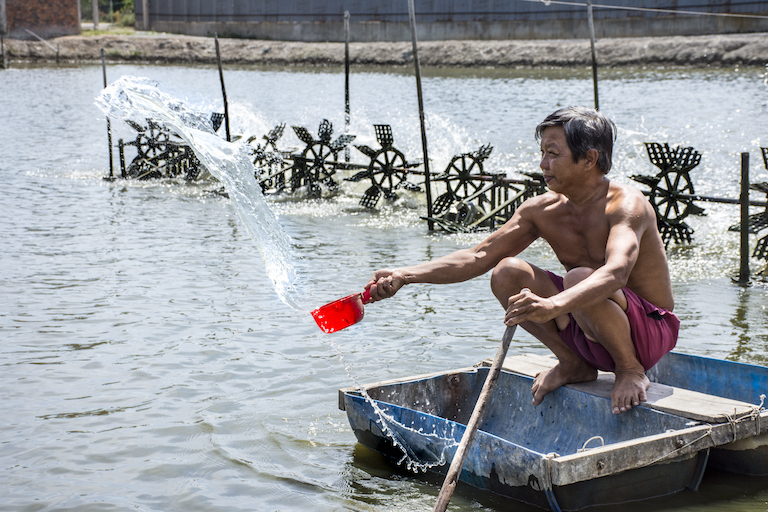 Duong Le feeds shrimp on his intensive shrimp farm in Long An Province, Vietnam. Image by Zoe Osborne for Mongabay.