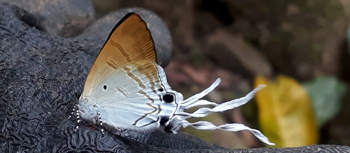 A butterfly in the forest outside Son Doong Cave. (Photo courtesy Professor Phuong Ta)
