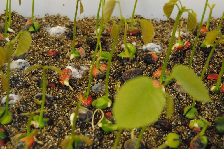 Germinating seeds in the seed bank. Photo by Ignacio Amigo/Mongabay