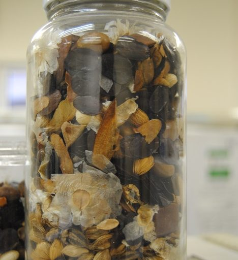 Stored seeds in the seed bank. Photo by Ignacio Amigo/Mongabay