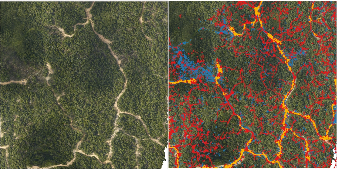 On the left side is a high-resolution aerial photo of a portion of the Timberdana concession. The image on the right shows the same area with roads/decks in orange, skid trails in red, and canopy gaps in blue obtained by analyzing the LiDAR data.