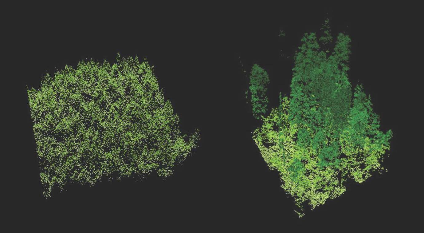 A pair of LIDAR images compare the structure of old-growth forest (right) to that of a new plantation of trees (left).