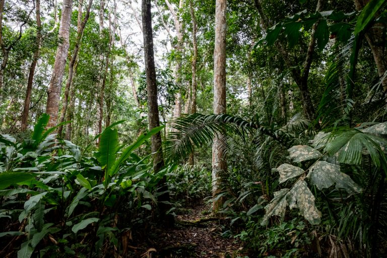 The dense, untrammeled jungle in Cocha Cashu where nature is in near-perfect balance. Photo courtesy Jason Houston.