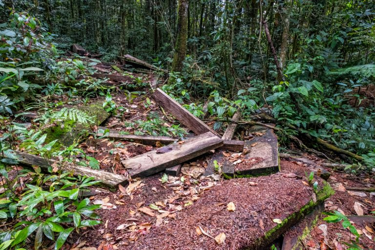 Evidence of illegal logging on a hiking trail in the Pantiacolla Mountain Range outside Manu National Park. Photo courtesy Jason Houston/Upper Amazon Conservancy.