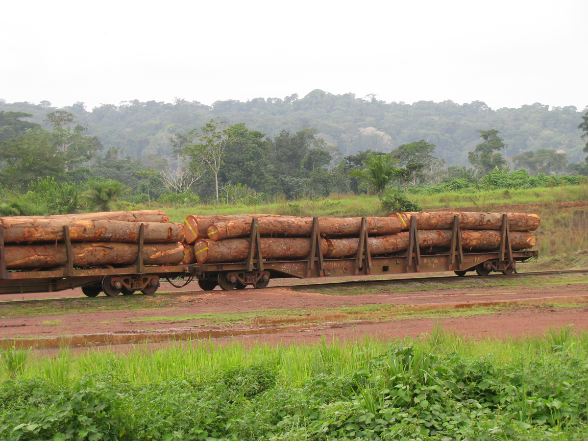 The crisis in the European tropical timber sector in Central Africa