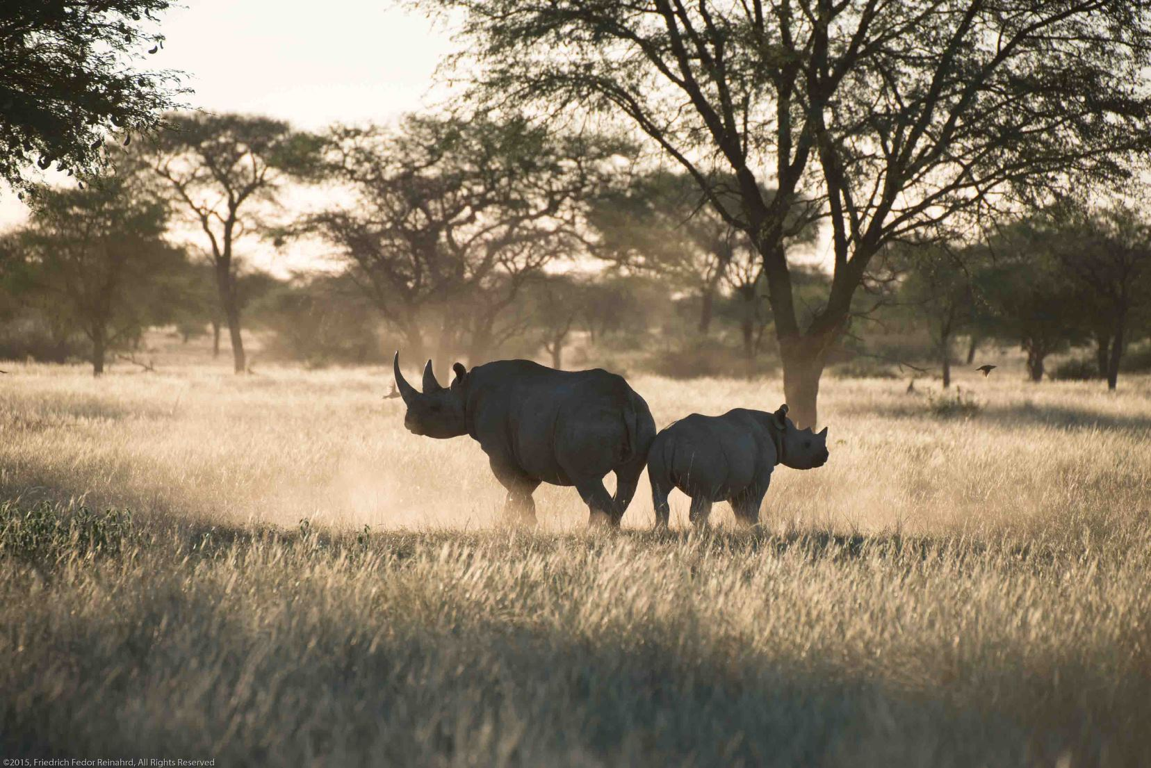 Rhinos in the Kuzikus reserve, Namibia.