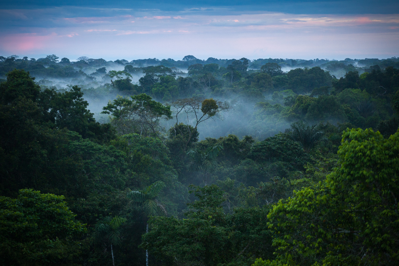 Fire, more than logging, drives Amazon forest degradation