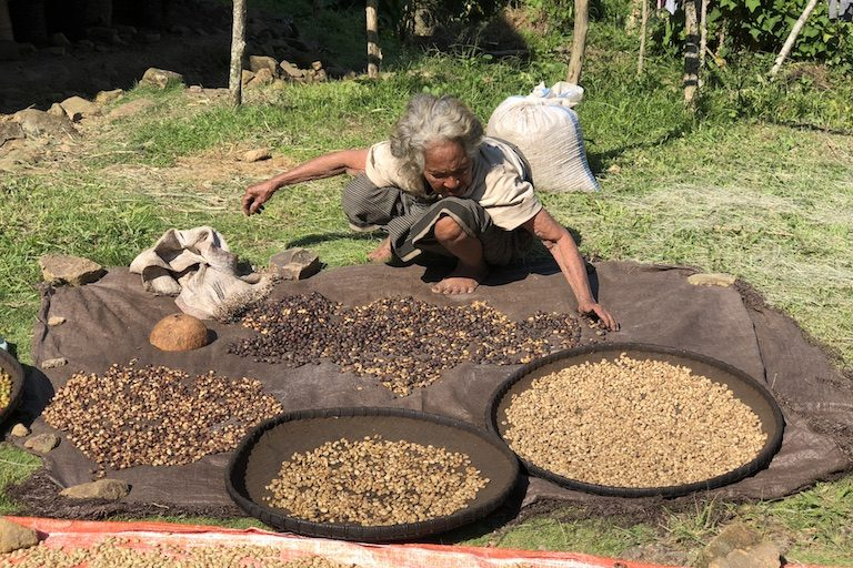 An elderly woman tends drying coffee. Image by Sarah Hucal for Mongabay.
