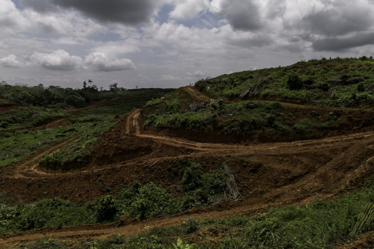 'I can't get out': Farmers feel the pressure as Ecuador's palm oil sector grows