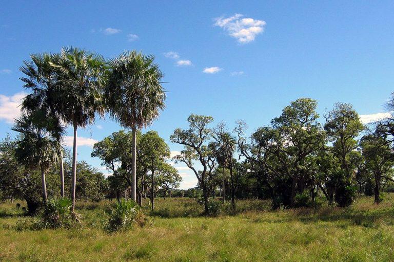 Landscape of the Gran Chaco, habitat of the elusive Chacoan fairy armadillo. Photo by Ilosuna, licensed via Creative Commons Attribution 1.0 Generic license.