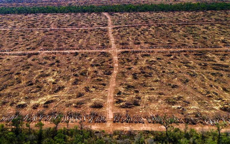Risultati immagini per slaughtering del chaco forests