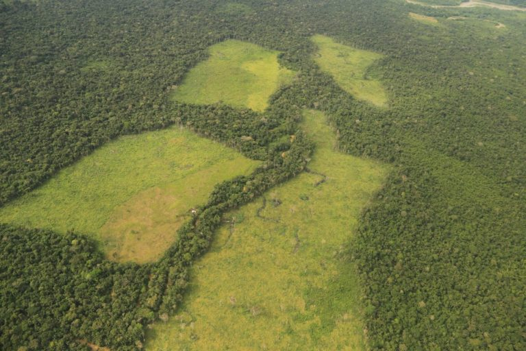 Colombia: Agencies rush to save national park from rampant deforestation