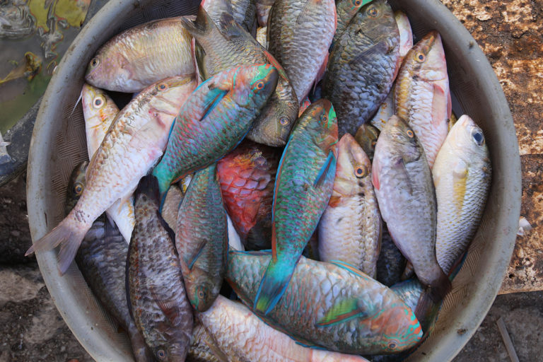A bucket of fish at a market in Labuan Bajo, Indonesia. Image by Rhett A. Butler for Mongabay
