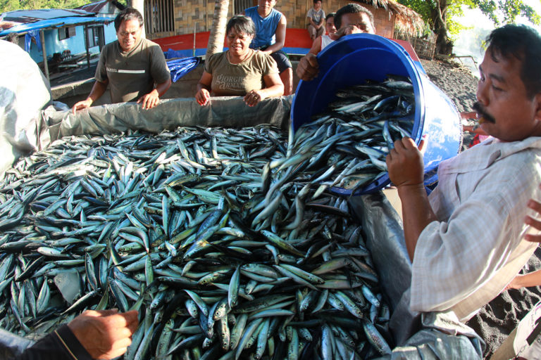 Men loading sardines for export into the back of a pickup truck in Indonesia. Photo by Rhett A. Butler for Mongabay.