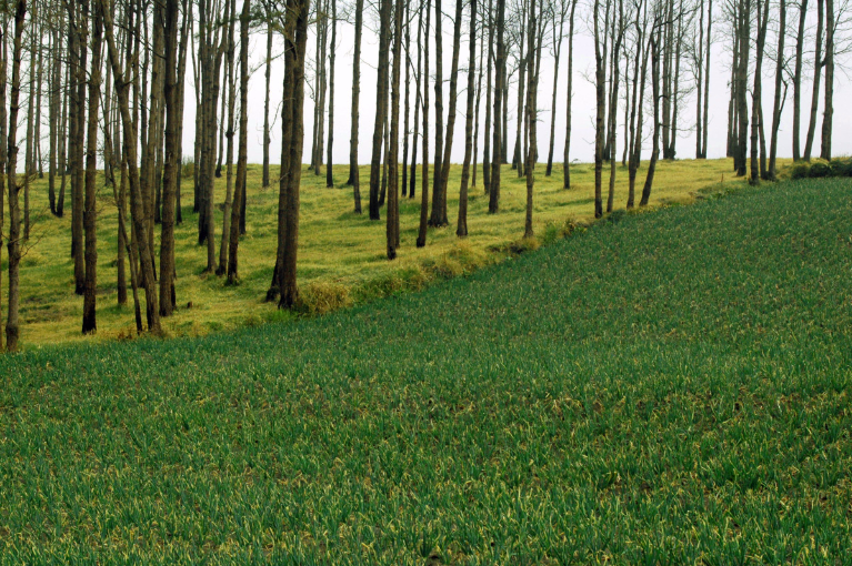 A tree plantation and adjacent crop field replace native forest in Indonesia. Managing land use at the landscape scale to retain tree cover is one strategy for both reducing climate change and adapting to it.