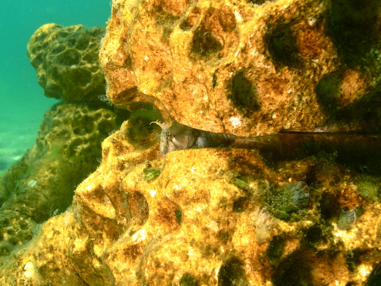 A previous MARS installation, a few months after it was deployed, became the home for various marine species. Although 3D printing will not solve the global threats that reefs face, it can support targeted, small-scale restoration efforts.