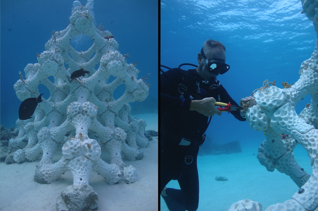 Left: Reef Design Lab's newest Modular Artificial Reef Structure (MARS) in the Maldives stands 2.5 meters (8.2 feet) tall with a 4-meter square (13-foot square) footprint. Right: 3D printing reefs allows researchers to experiment with restoration methods, such as how coral fragments are attached to reefs (here, using zip ties).