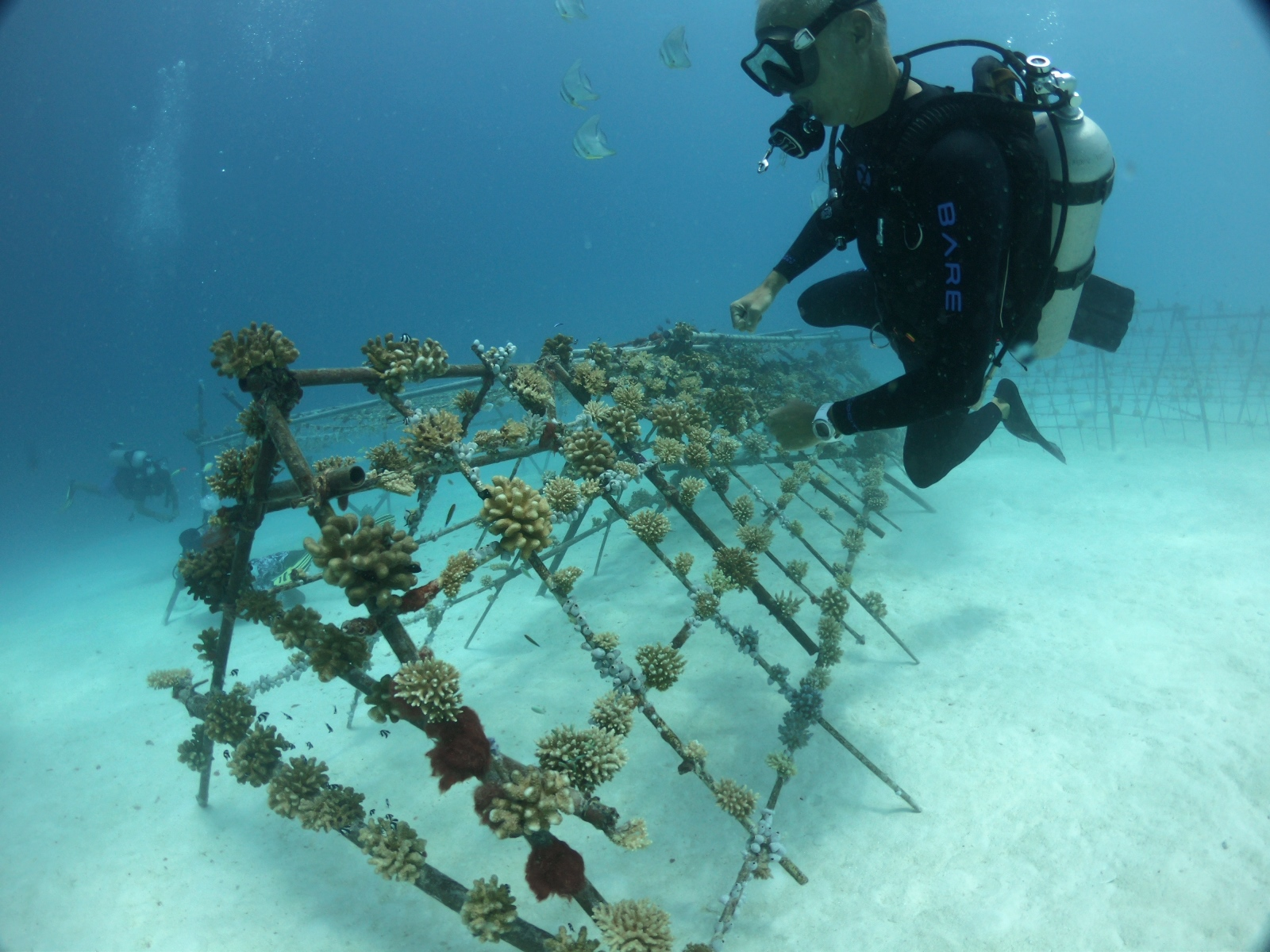 Arjan Sierink inspects the coral reef farm he initiated at Summer Island Maldives, on a budget of not more than $1,000.
