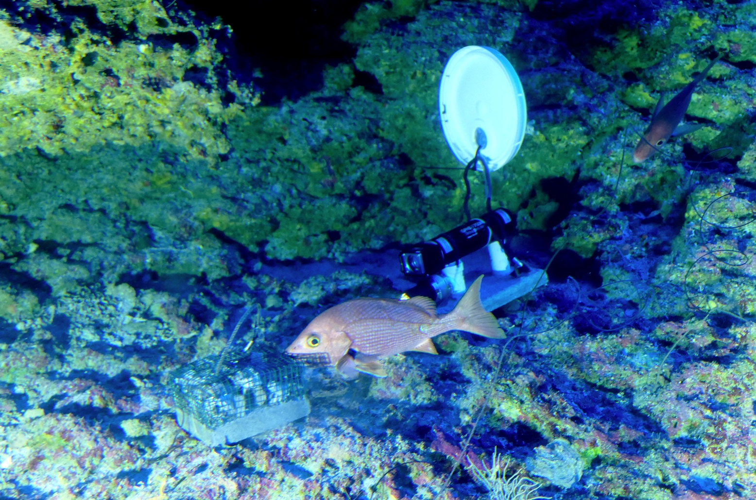 Cameras attached to bait boxes monitored marine life in the deep ocean.