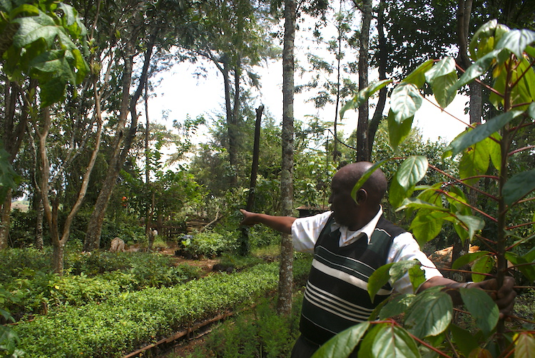 Farmers see promise and profit for agroforestry in southern
