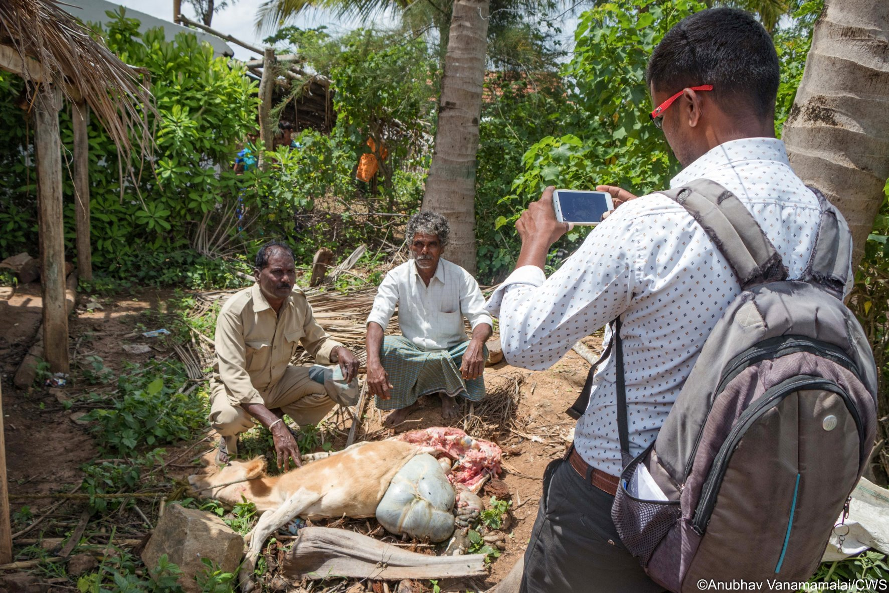 Wild Seve field assistant documenting the killing of a family's cow by a wild predator. Photographic evidence facilitates the process of obtaining compensation for wildlife damage.