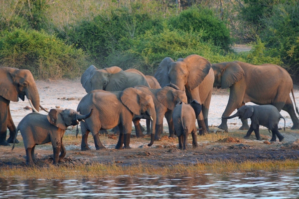 87 elephants found dead in Botswana, one of last safe havens for the species