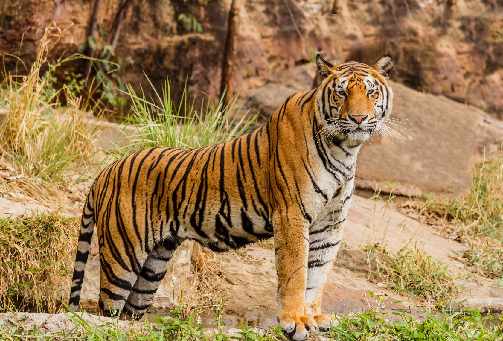 DNA database helps Nepal's officials monitor tigers ...