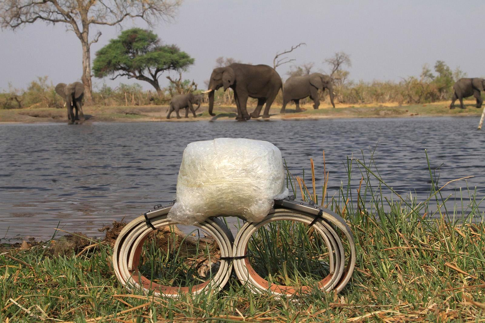 An elephant tracking collar with its transmitter tag packaged for transport. Satellite GPS tags, which weigh roughly 10 kg ( lb), sit atop the elephant's neck and must be balanced with a counter-weight below the neck.