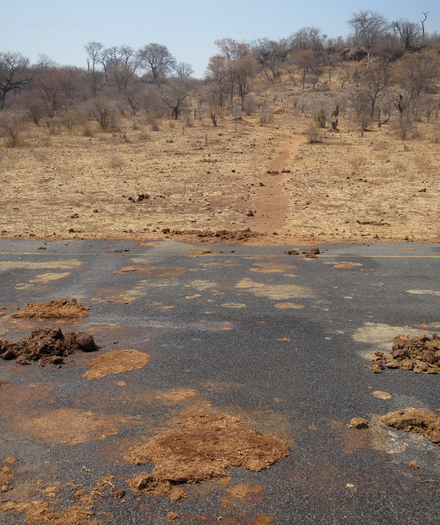 A wildlife trail descends from Chobe National Park in northern Botswana across the main road (note tell-tale dung piles) en route to the Chobe River. Elephants and other animals use numerous such trails to reach the permanent water source, particularly during dry season.