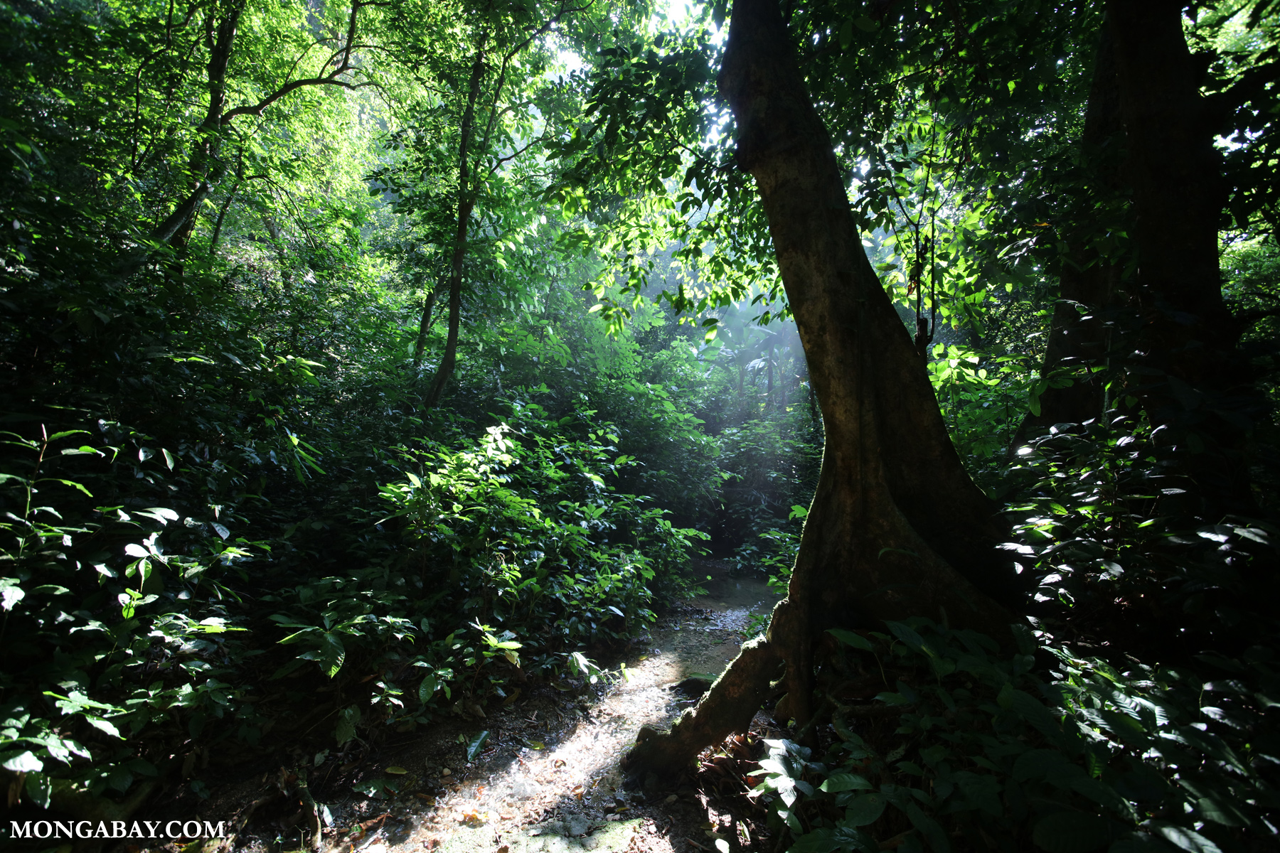 Lowland rainforest in Southeast Asia. Photo by Rhett A. Butler.