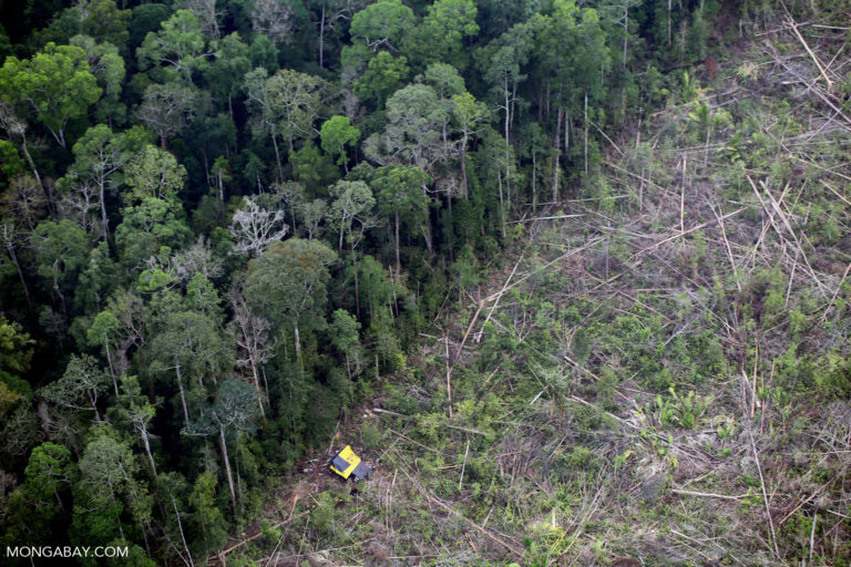 Industrial deforestation in Sumatra, Indonesia. Photo by Rhett A. Butler.