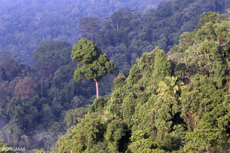 Indonesian rainforest in Bukit Tigapuluh, Sumatra. Photo by Rhett A. Butler.