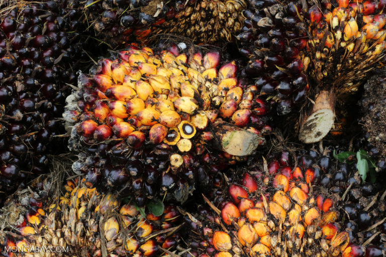 US senators warn fund managers over palm oil