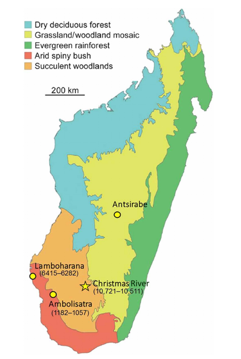 Vegetation map of late Holocene (pre-industrial) Madagascar, showing sites with butchered elephant bird bones and calibrated AMS radiocarbon dates. Map from Hansford et al 2018.