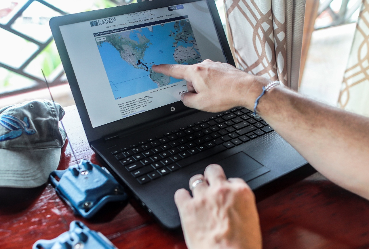 Sea Turtle Conservancy research biologist Dan Evans tracks a turtle's progress online. The satellite tag beams the turtle's positions to instruments on a satellite, which send them on to Evans and his colleagues.