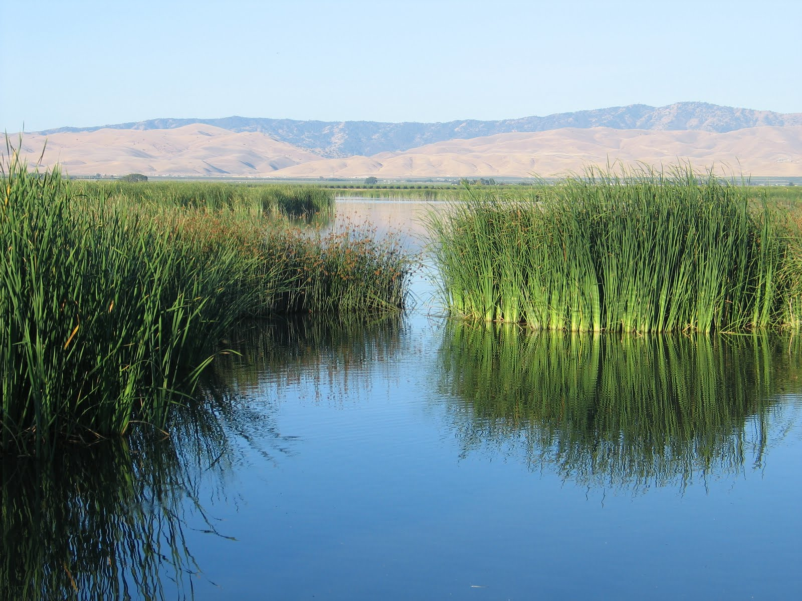 Wetlands in central California's otherwise dry environment.