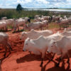 Cattle in Mato Grosso, Brazil. Photo by Rhett A. Butler for Mongabay.