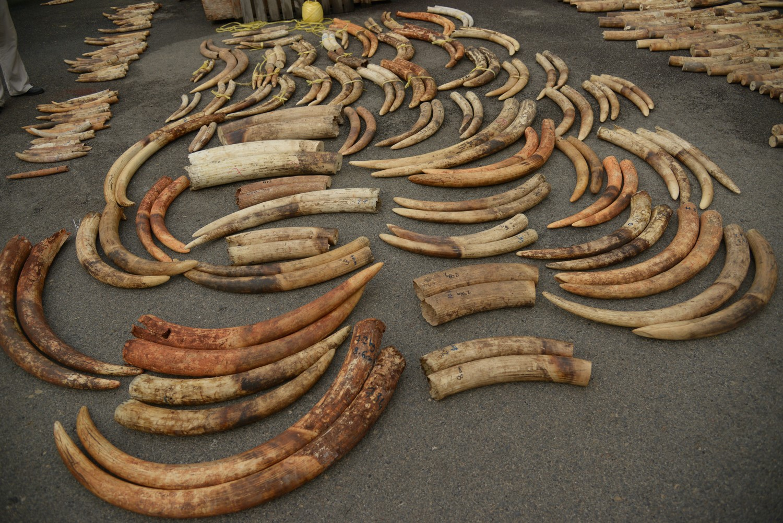 Wildlife detectives link smuggled African elephant ivory to 3 major