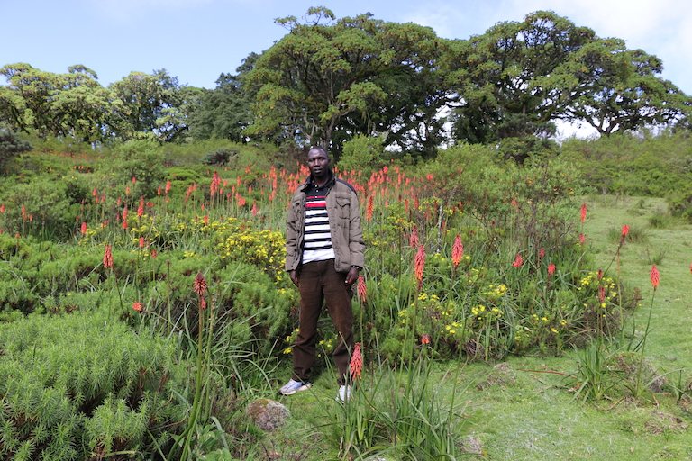Elias Kimaiyo, a Sengwer activist, poses among wildflowers in one of the glades in Embobut Forest where he used to graze his livestock before forest guards evicted his family from the forest. Image by Anthony Langat for Mongabay.