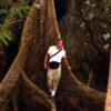 Mongabay founder Rhett A. Butler in Brazil in 1999, the year Mongabay.com first went online.