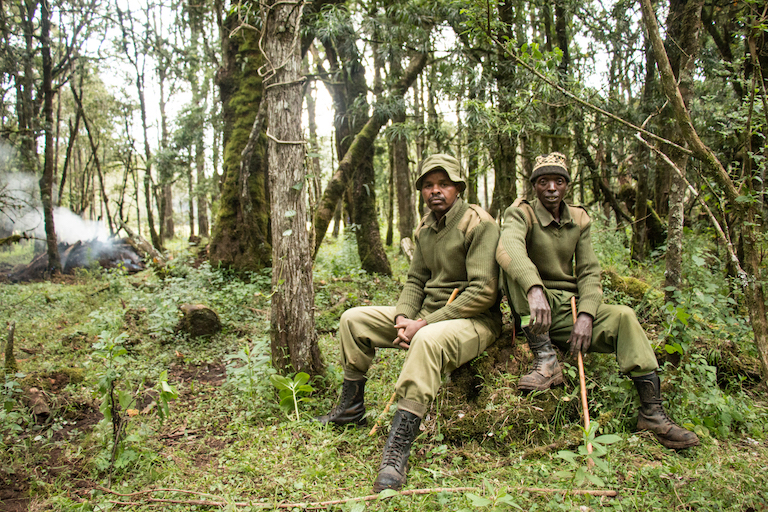 Daniel Barkurie Prengei, 40, left, and Dickson Kitanga, 47, pose for a portrait in the Mau Forest Complex near their home in Mariashoni, Kenya. They are Ogiek scouts who patrol the forest looking for illegal activities such a charcoal production and logging. Image by Nathan Siegel for Mongabay.